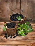 Шелковицы корзин польностью черные с листьями Стоковое фото RF