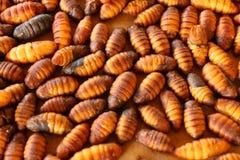 Шелкопряд Chrysalis Стоковые Изображения