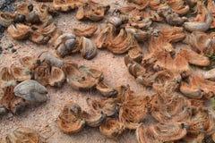 Шелухи кокоса на том основании Стоковые Фото