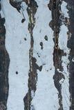 Шелушась краска 37 Стоковые Фотографии RF