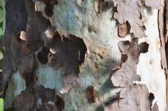 Шелушение расшивы Стоковые Фотографии RF