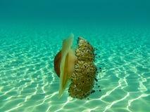 Шикарная медуза в морских водах Sithonia, Chalkidiki, Греции Стоковая Фотография RF