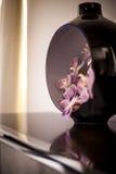 шикарная орхидея Стоковое Фото