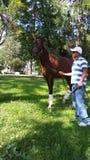 шикарная лошадь Стоковые Изображения