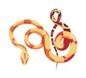 Шикарная sinuous змейка изолированная на белой предпосылке Экзотический плотоядный гад, ядовитый хищник, дикая пустыня или иллюстрация штока