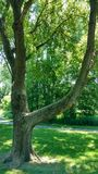 Шикарное дерево в парке Стоковое Изображение RF