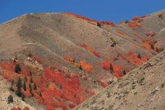 Шикарные листья стоковое фото rf