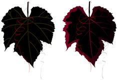 шикарные листья виноградины иллюстрация вектора