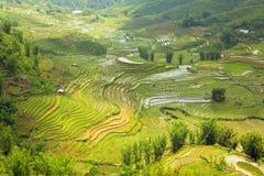 шикарные поля фермы, террасы рисовых полей, Sapa, Вьетнам Стоковая Фотография