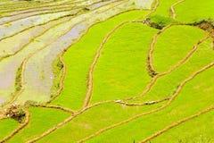 шикарные поля фермы, террасы рисовых полей, Sapa, Вьетнам Стоковые Фотографии RF