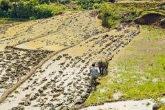 шикарные поля фермы, террасы рисовых полей, Sapa, Вьетнам Стоковые Фото