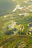 шикарные поля фермы, террасы рисовых полей, Sapa, Вьетнам Стоковая Фотография RF