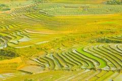 шикарные поля фермы, террасы рисовых полей, Sapa, Вьетнам Стоковое Фото