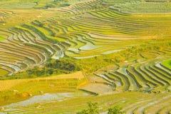 шикарные поля фермы, террасы рисовых полей, Sapa, Вьетнам Стоковые Изображения