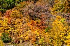 Шикарные цвета осени Стоковые Изображения