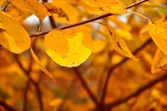 Шикарные цвета Стоковая Фотография