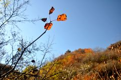 Шикарные цвета Стоковое Фото