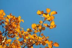 Шикарные цвета Стоковое фото RF