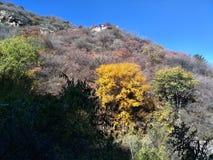 Шикарные цвета Стоковая Фотография RF