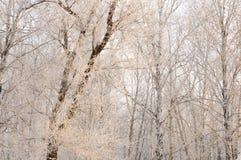 Шикарный заморозок на деревьях Стоковое фото RF