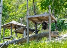 Шимпанзе сидя в зоопарке Стоковые Изображения