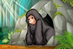 Шимпанзе стоя перед пещерой Стоковое фото RF