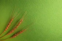 3 шипа пшеницы слева рамки стоковая фотография