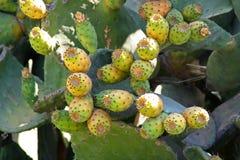 Шиповатая груша с смоквами Стоковая Фотография RF