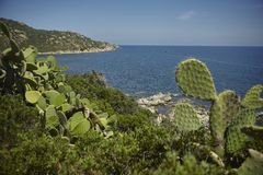 Шиповатые груши на южном побережье Сардинии Стоковые Фотографии RF