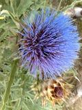 Шиповатый цветок Стоковые Изображения