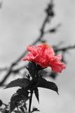 Шипучка цвета Стоковое Фото