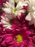 Шипучка цвета Стоковые Фото