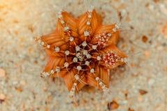Шипы кактуса повсеместно в хобот стоковая фотография