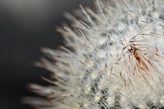 Шипы кактуса Стоковые Изображения