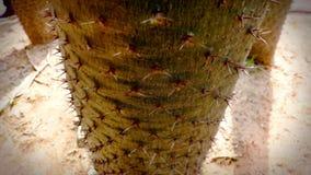 Шипы крупного плана кактуса в песке Стоковые Фото