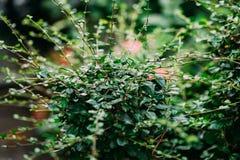 Шип зеленого растения Стоковое фото RF