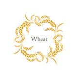Шип риса пшеницы Стоковые Фотографии RF