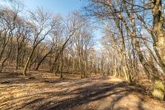Широкая дорога леса в середине деревьев, на в конце февраля в зиме Стоковые Фото