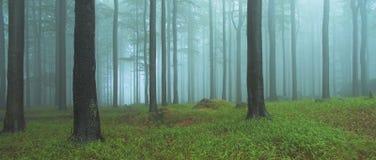 широкая древесина Стоковое Изображение