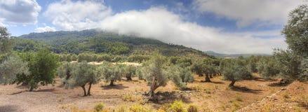 широкая ландшафта панорамная Стоковое Изображение RF