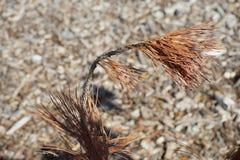 Широкая мертвая сосна Стоковая Фотография RF