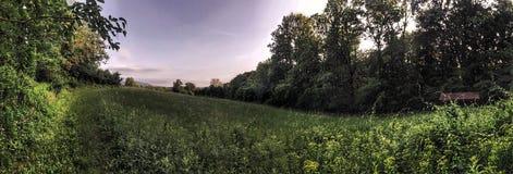 Широкая панорама злаковика Стоковые Изображения