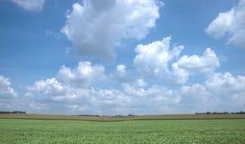 широкая поля открытая Стоковая Фотография RF