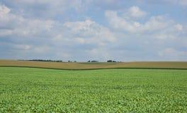 широкая поля открытая Стоковое Фото