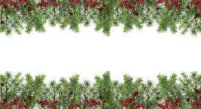 Широкая праздничная картина Рождественская елка, конусы и красные ягоды Iso Стоковое Изображение
