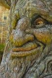Широкая сторона глаз в коре дерева Стоковые Фотографии RF