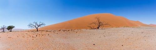 Широкая дюна 45 панорамы в sossusvlei Намибии Стоковая Фотография