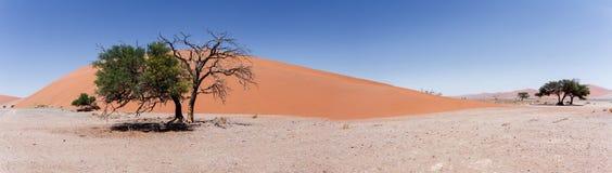 Широкая дюна 45 панорамы в sossusvlei Намибии Стоковые Изображения RF