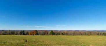 Широкие деревья и небо поля взгляда Стоковые Изображения