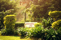 Широкие зеленые джунгли Стоковые Фотографии RF